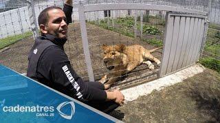 Black Jaguar White Tiger, el santuario de los animales silvestres en Semanal 28 12/10/15