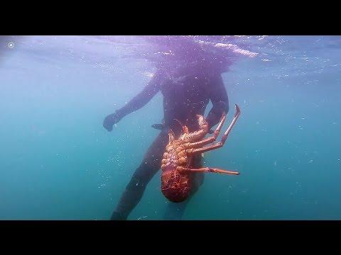 4.2kg Southern Rock Lobster