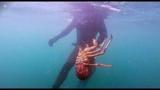 4 2kg Southern Rock Lobster