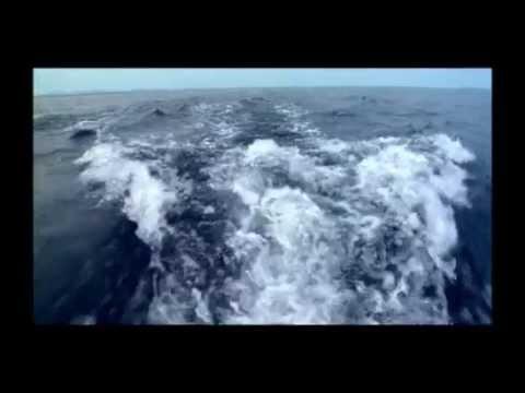William Orbit -- Montok Point (Mercycat Edit) mp3