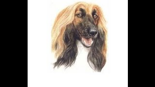 Afghan Hound (training Guide) PDF Book!