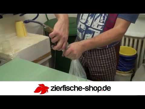 Zierfische youtube for Zierfisch shop