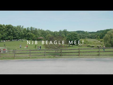 Beagle Meet 2019