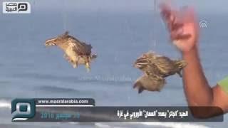 مصر العربية | الصيد