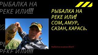 Рыбалка на реке Или Коктал июнь 2021 Сом Амур Карась Часть2