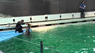 поющие дельфины (дельфинарий Санкт-Петербург)(, 2015-03-19T14:25:03.000Z)