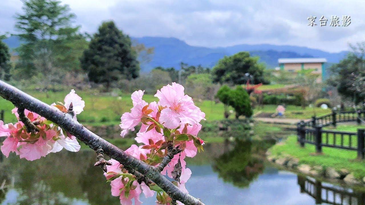 臺灣唯一秋天賞櫻景點–小半天石馬公園(Cherry blossoms in autumn) - YouTube