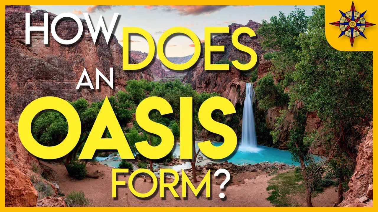 Desert habitats homework help | KS1 and KS2 geography