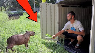 BUILDING A HOME On THE RANCH For My Pet CAPYBARAS!!