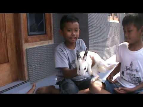 Kelinci Itu Belong Dalam Bahasa Madura