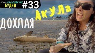 Остров Хураа. Дохлая акула | мои мальдивские будни #33