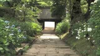 茨城県桜川市の名刹「雨引観音」は、季節ごとの花で彩られることで有名...