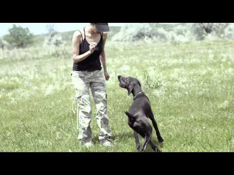 dog trainers - Bel Air MD | 410-836-8906 | Puppy Training