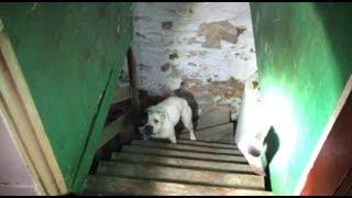 家を買ったら地下室に犬がつながれていた!との通報に救助隊が駆けつけた