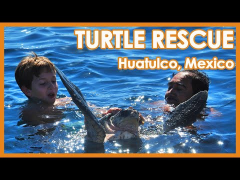 Turtle Rescue Huatulco Mexico