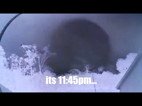 S T R A N G E  home security camera footage | Looking to the North