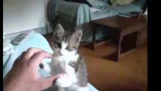 Приколы с кошками ютуб