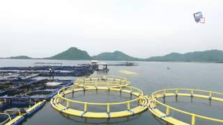 AgriStream TV - Keramba Jaring Apung HDPE Aquatec