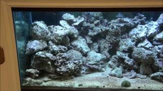 Diy Led Reef Aquarium Light - Part 1