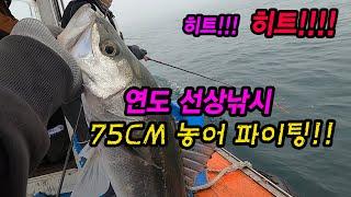 여수 연도 선상 낚시 75CM 농어 파이팅 영상!!