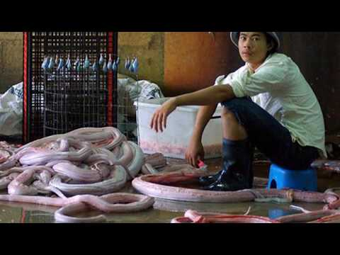 Python Factory; A Visit To The Snake Skin Factory