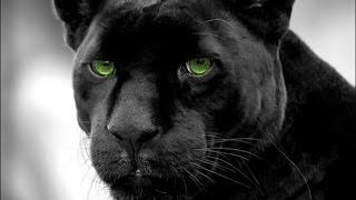 топ 10 самых  красивых животных