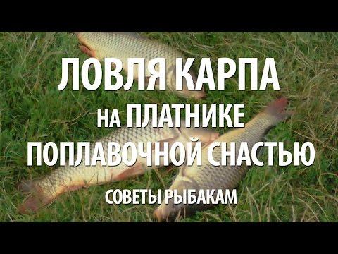 платная рыбалка на карпа в ярославской области