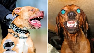10 Most Angry and Aggressive Dog Breeds in the World