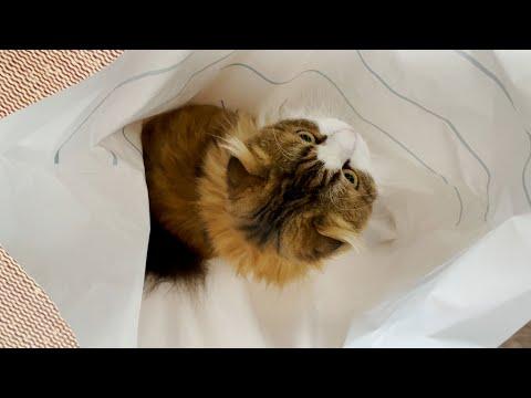 気が付くと猫が袋の中に入っていた