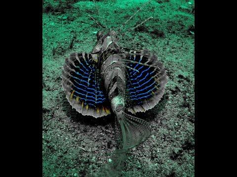 Malapascua diving adventure