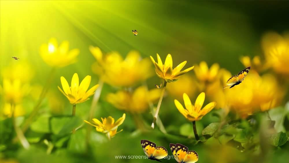 Анимированные обои для рабочего стола. Цветы, бабочки ...