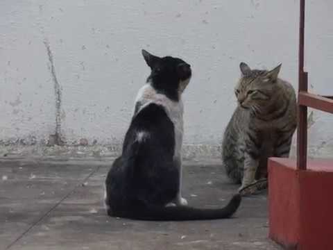 Alley Cats Fighting - Part 2