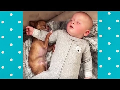 Baby NO WORRIES about Sleeping with Dog | Funny Compilation