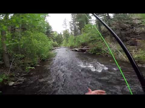 Dry Fly Fishing In The Cimarron River May 2018
