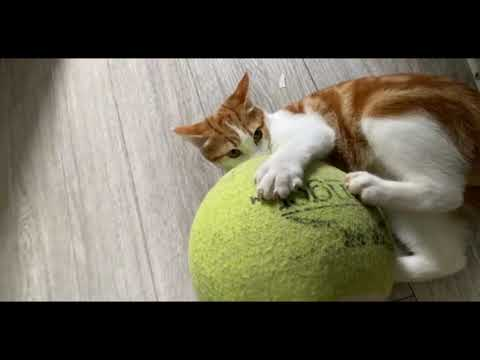 CATS will make you laugh your head off- Funny CAT compilation