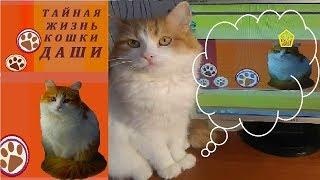 ШАПКИ КОШКИ ДАШИ. ГОЛОВНЫЕ УБОРЫ КОШКИ ДАШИ. Подборка видео шапки для кошки Даши.