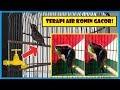Terapi Air Semua Jenis Kolibri Kolibri Ninja Konin Kombinasi Suara Air Klubburung(.mp3 .mp4) Mp3 - Mp4 Download