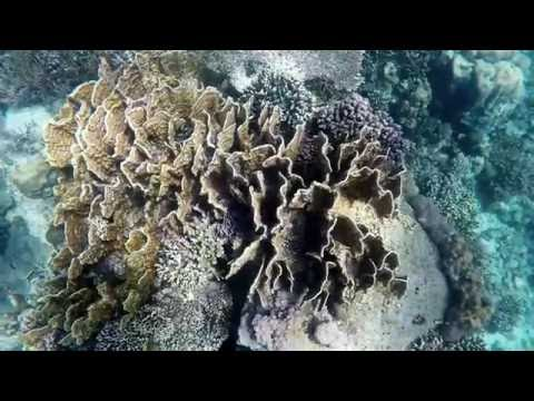 First Diving Video in Kupang