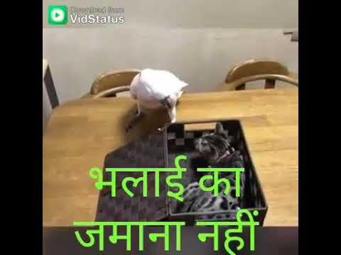 Download Su thau full gujarati movie