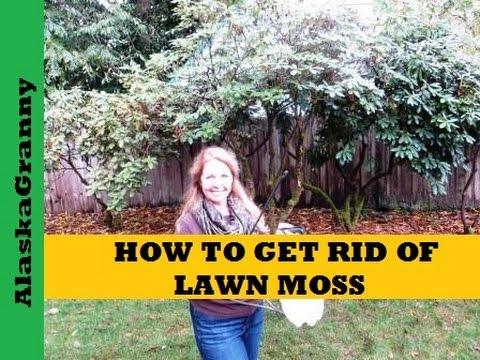 Lawn Moss Funnydog Tv