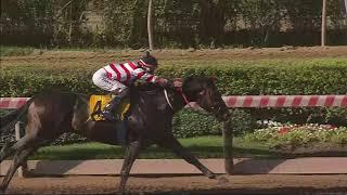 Vidéo de la course PMU PREMIO PERSONIFICADO HANDICAP