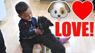 LOVE FOR PETS + MALL OF AMERICA AQUARIUM!