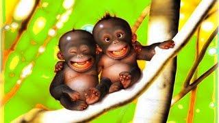 Подборка приколов с обезьянами. Обезьяны отжигают не по-детски