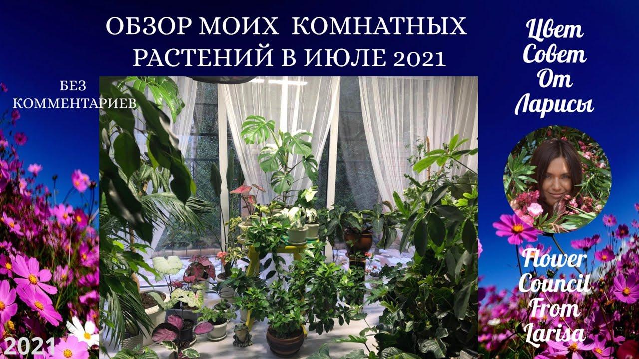 ОБЗОР МОИХ КОМНАТНЫХ РАСТЕНИЙ В ИЮЛЕ 2021
