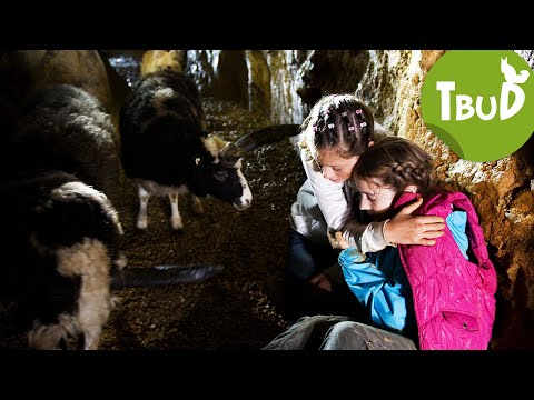 Höhlenangst (Folge 25) | Tiere Bis Unters Dach | SWR Kindernetz
