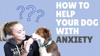 How to Help Your Dog with Anxiety (Training Tips + CBD Blend)