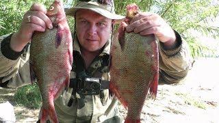 Рыбалка. Новая НАЖИВКА на ЛЕЩА. Ловля леща на Кольцо. Рыбалка на Волге 2018