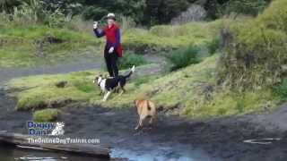 How To Video Dog Training Tips Online Courses Basics Secrets At Home