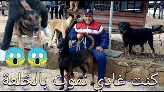 سوق القريعة | souk quriaa | صباح الأحد | حرش كلبو وهجم عليا قتلني بالخلعة