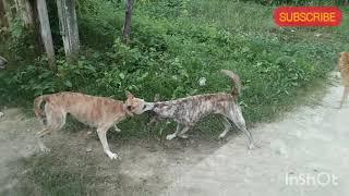 Dog & cat fighting
